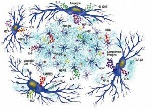 cytokines-300x217